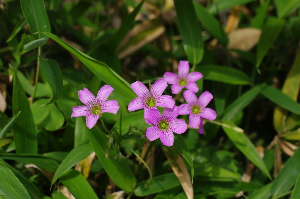 なんかの花