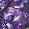紫陽花の裏側