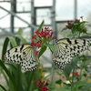 橿原昆虫館