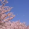 桜_大阪城公園