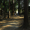 モリ森公園