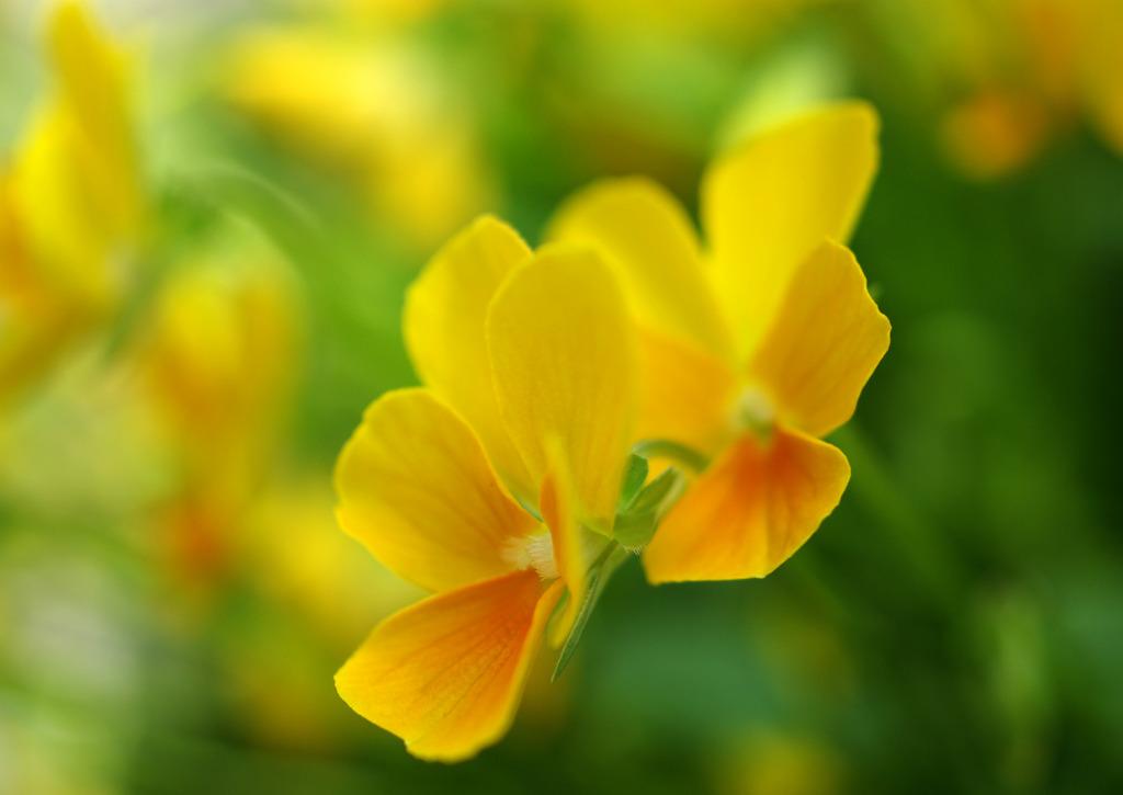 路傍の花5