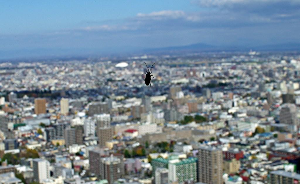 JRタワー36Fの虫(〇o〇;)