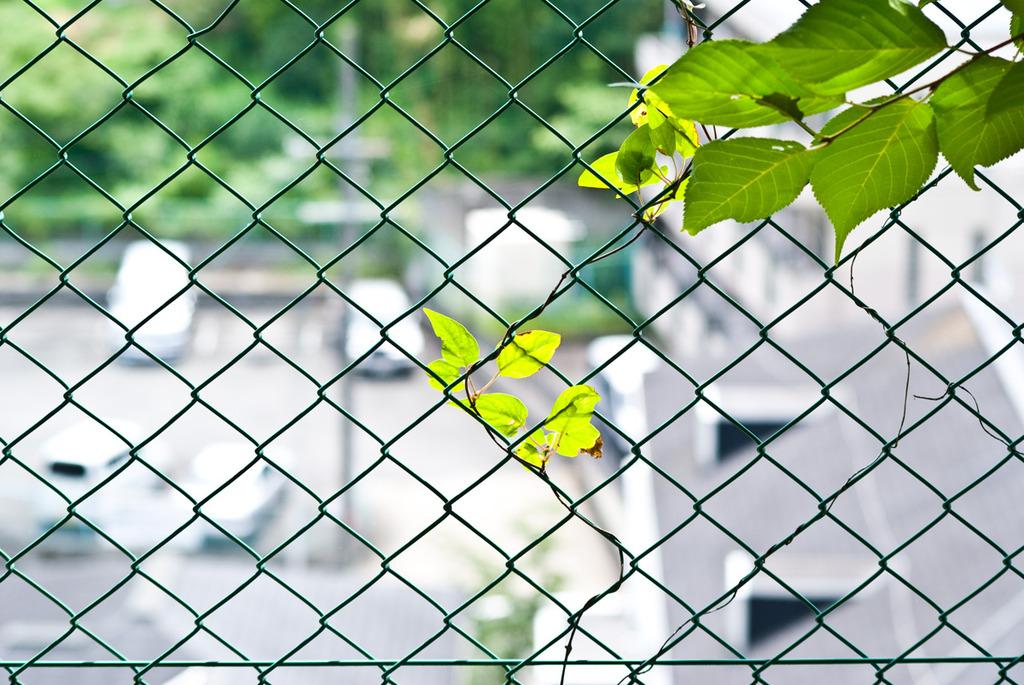 フェンスに張りつく