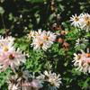 世界に・・・たくさんだけの花