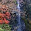 黄葉散りゆくお万の滝