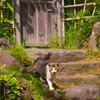 裏木戸の猫