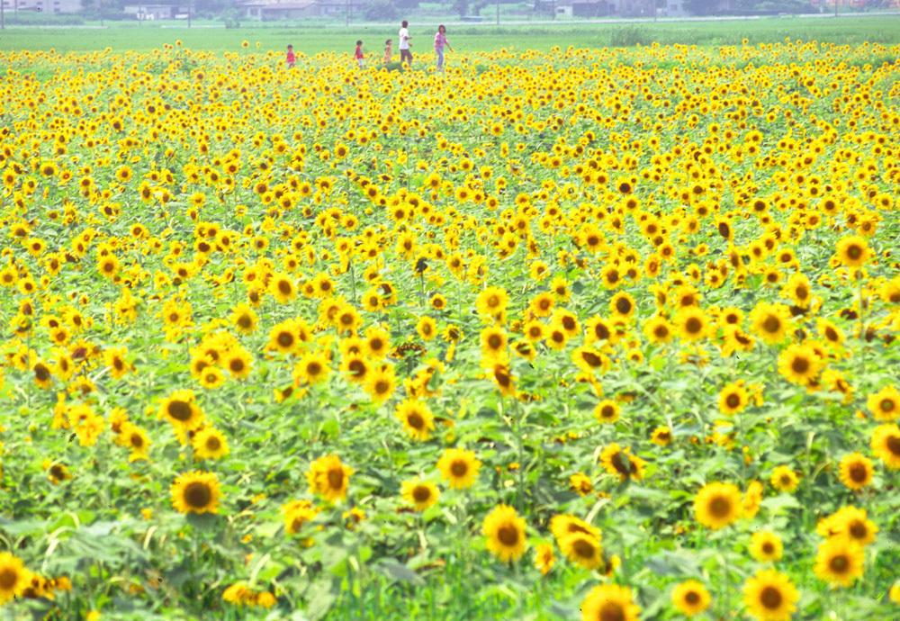 夏の日の思い出