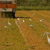 稲刈りのあとの収穫