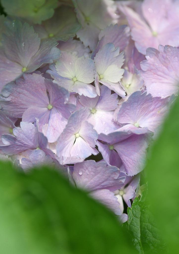 六月の花束