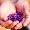 紫の実いっぱい