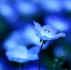 BlueWish