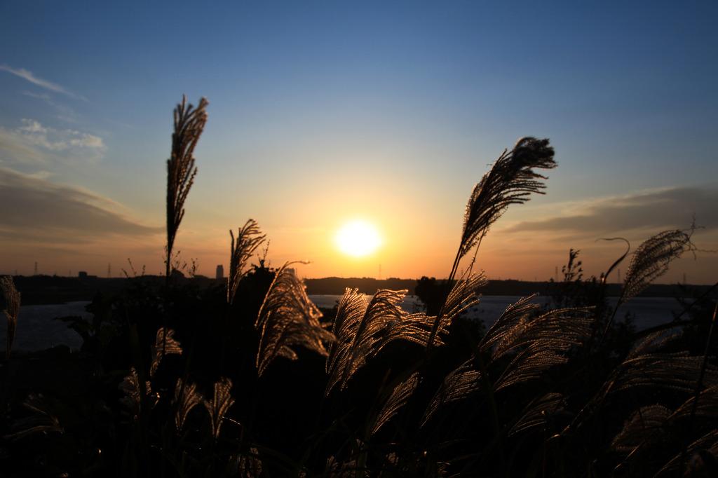 印旛沼の夕日