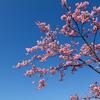 桜ではないです