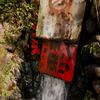20110709-SDIM2961
