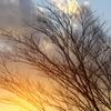 裸木と夕焼けPart2
