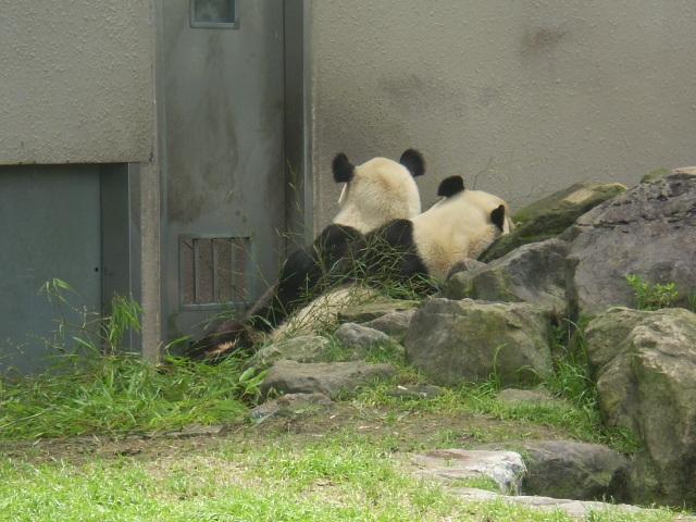 2パンダさん