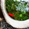 水草と金魚