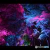 糺の森の光の祭05@下鴨神社