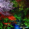 糺の森の光の祭04@下鴨神社