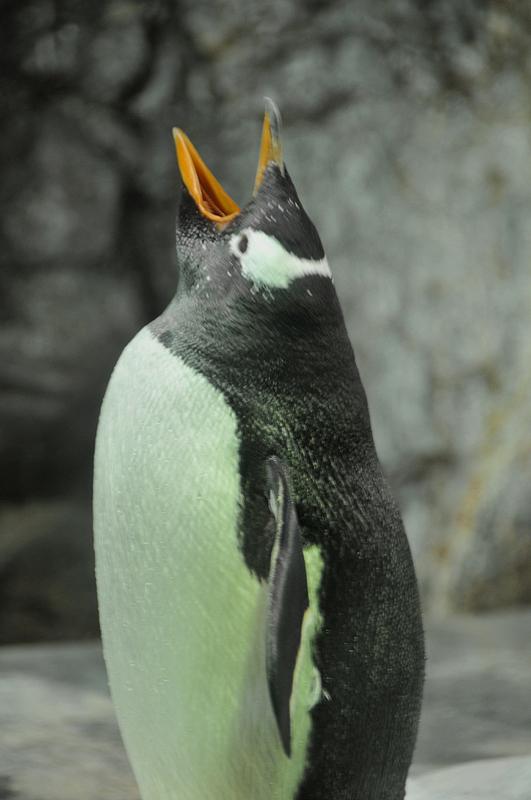 なくペンギン 海遊館
