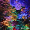 糺の森の光の祭06@下鴨神社