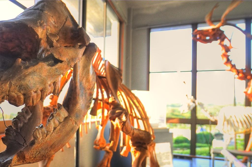 恐竜骨格 秋吉台