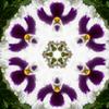 kaleidoscope パンジー