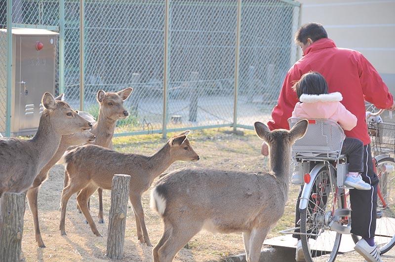 鹿と人 奈良市