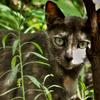 尾道で出会った猫2