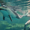 イルカ1 海遊館