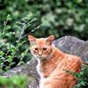 尾道で出会った猫1