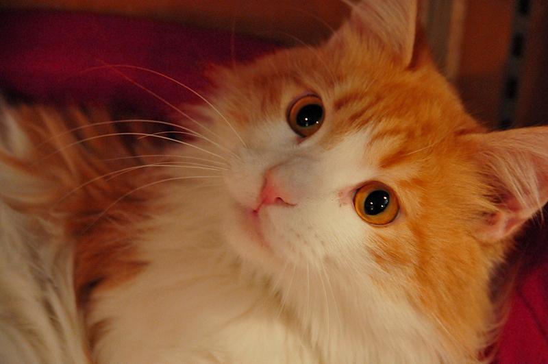 猫 天保山アニパ