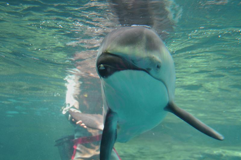 イルカ2 海遊館