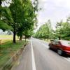 メタセコイア並木+speed マキノ