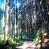 森林浴/HDR