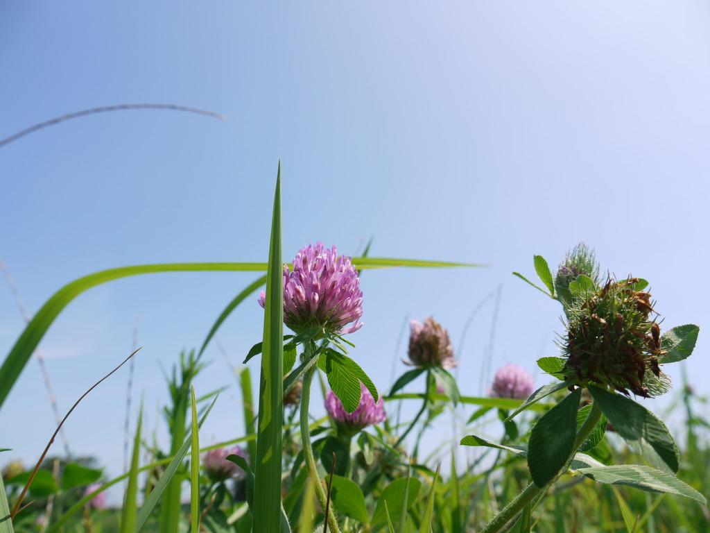 路傍の花 参