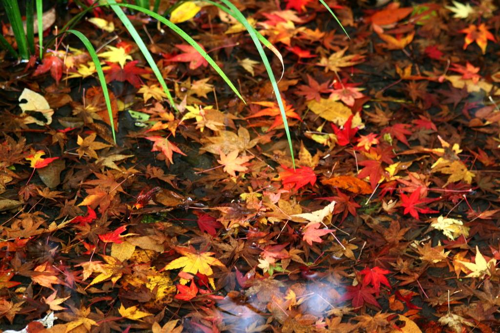 落ち葉のハーモニー