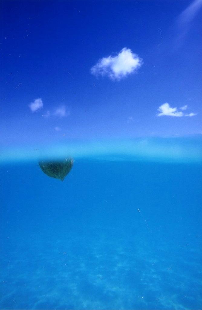 Aquatic blue 4