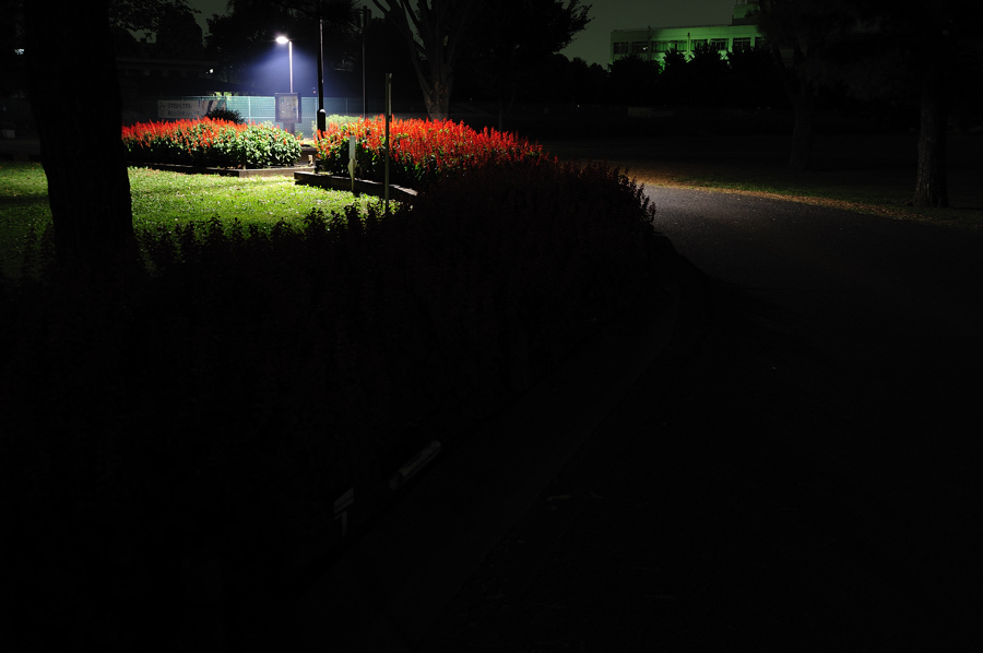 街灯の下で、、、。