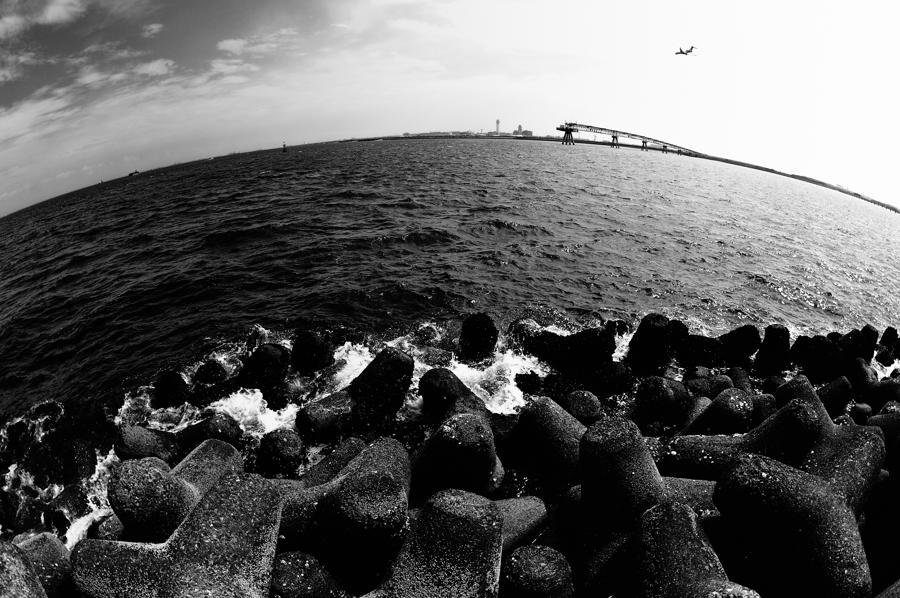 海を見続けるテトラたち。