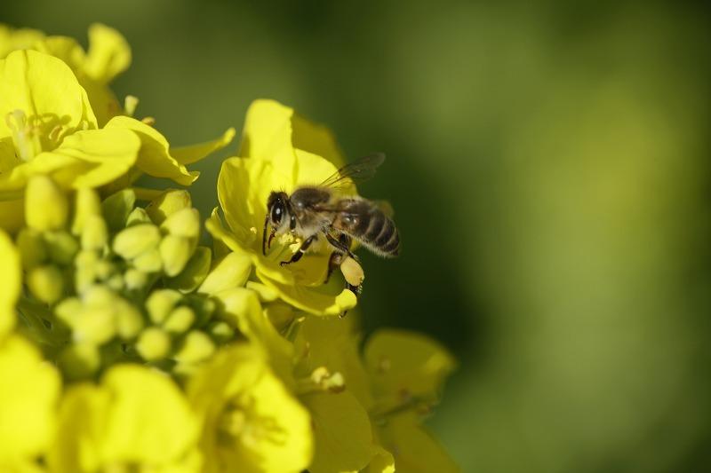 春一番ハチ6