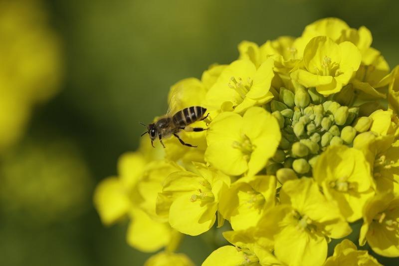 春一番ハチ7