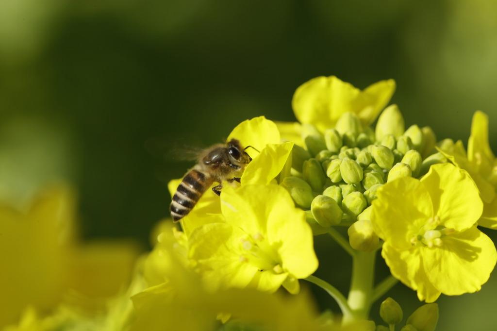 春一番ハチ10