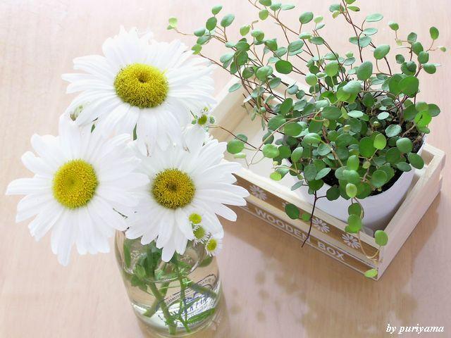 キッチンに花を飾って