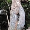 えっちな木