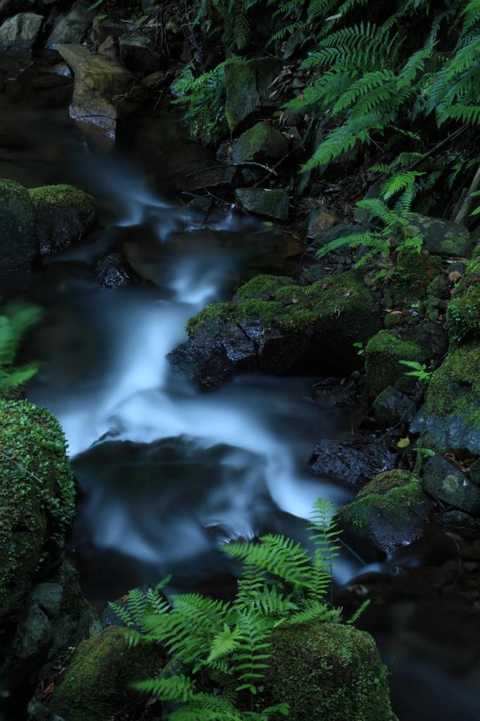 癒し、聖水の流れに、、、。