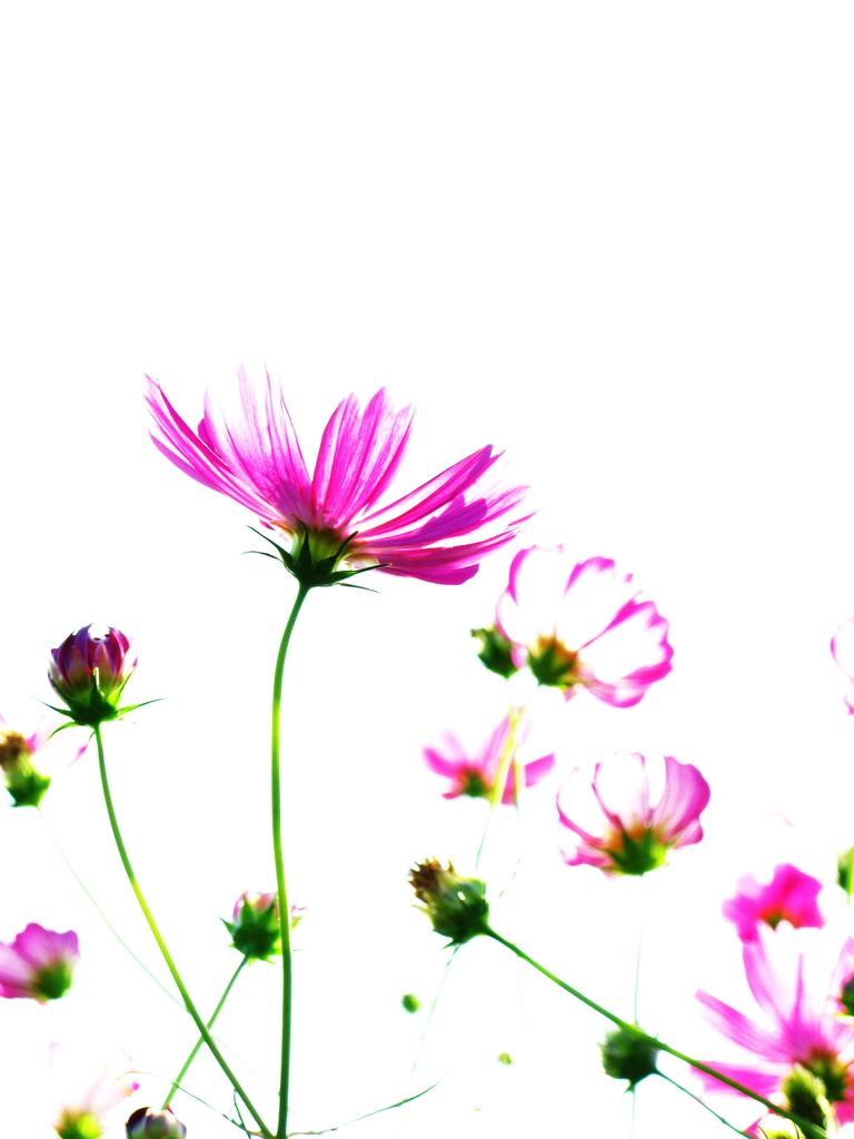 秋の癒し花