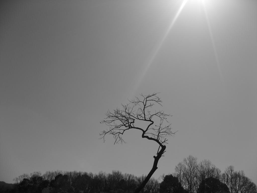物静かな立ち木