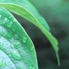 梅雨の庭木